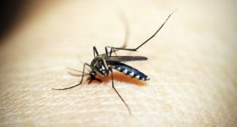 Mosquitoes and Worldwide Disease