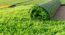 Real Grass Vs. Fake Grass – Choose the Artificial Grass