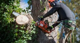 6 Tree Removal Mistakes You Should Avoid