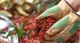 5 Smart Ways to Mulch Hostas