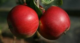 Order from Our Online Fruit Tree Nursery