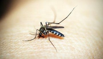 Mosquitoes and Worldwide Disease