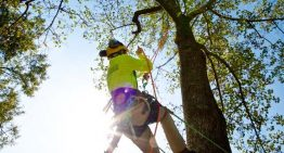 What Does a Tree Service Do