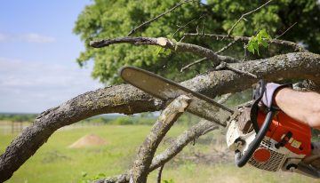 What is tree removal?