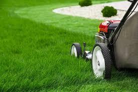 Benefits of Choosing Professional Darwin Gardening Services
