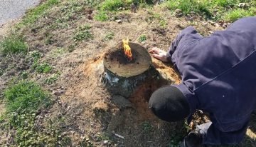 What are the ways to remove a tree stump?